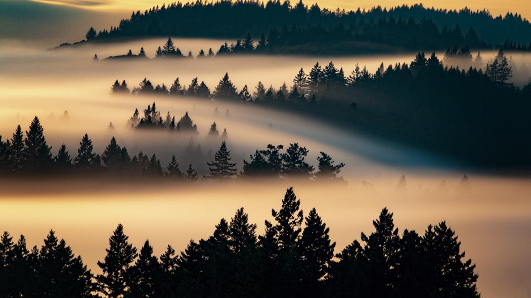 Fog on Mt. Tamalpais at sunrise