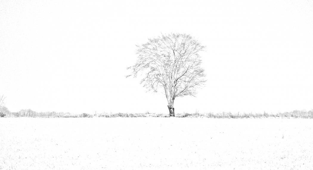 High key winter image