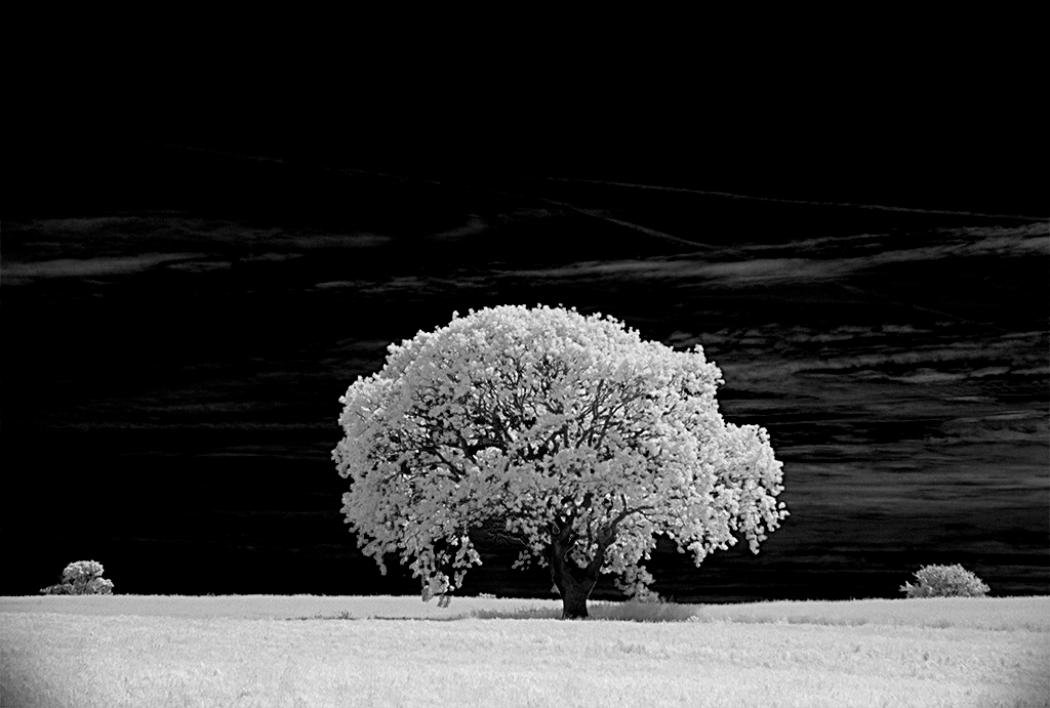 Tree in White Summer